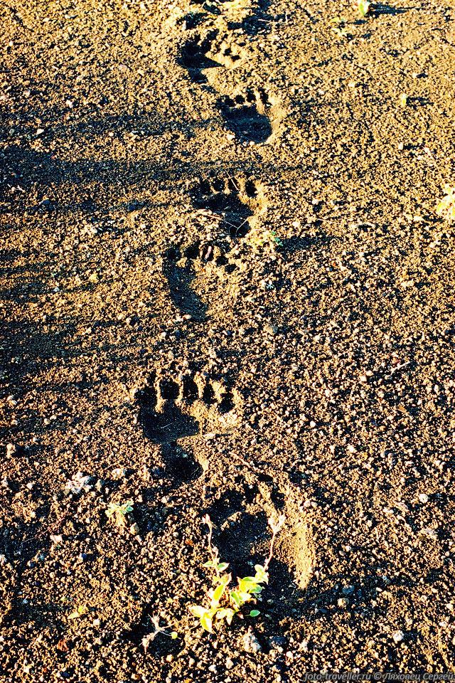 иногда следы медведя фото отдохнуть море, перед