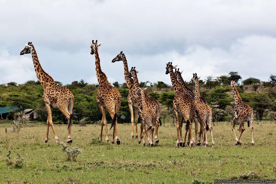 http://foto-traveller.ru/foto/kenya/kenya2012/100.jpg
