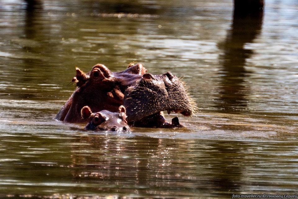 http://foto-traveller.ru/foto/kenya/kenya2012/360.jpg
