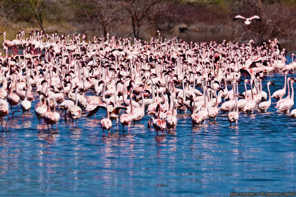 http://foto-traveller.ru/foto/kenya/kenya2012/385.jpg