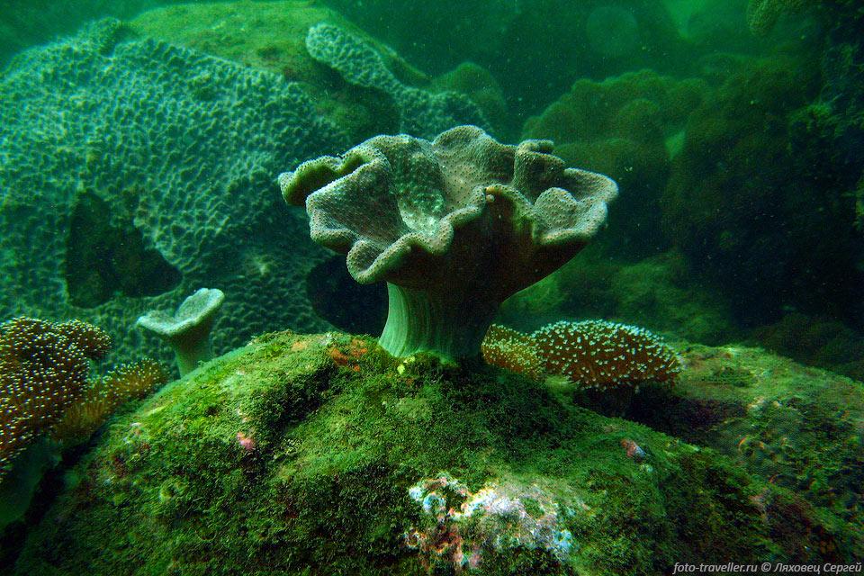 Картинки по запросу подводные грибы