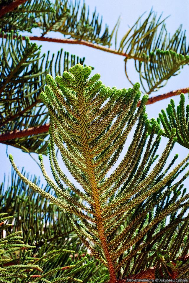 деревья туниса фото экзотические пейзажи наполнят